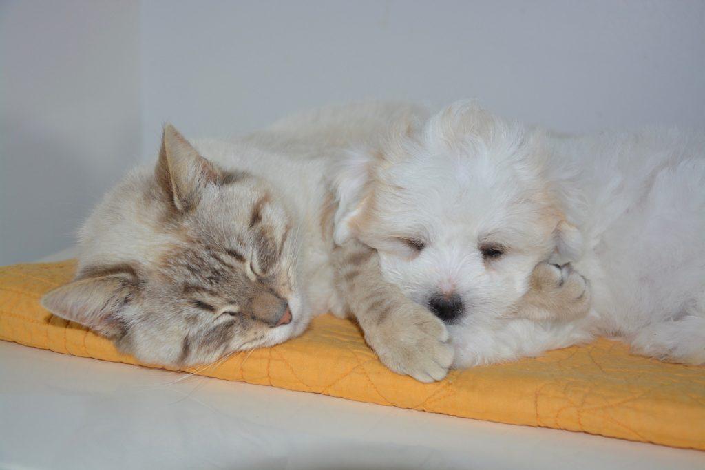 Arkansas Pet Friendly Rehabs