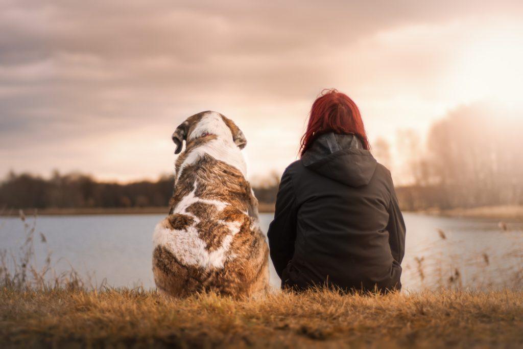 Drug Rehab Allows Dogs