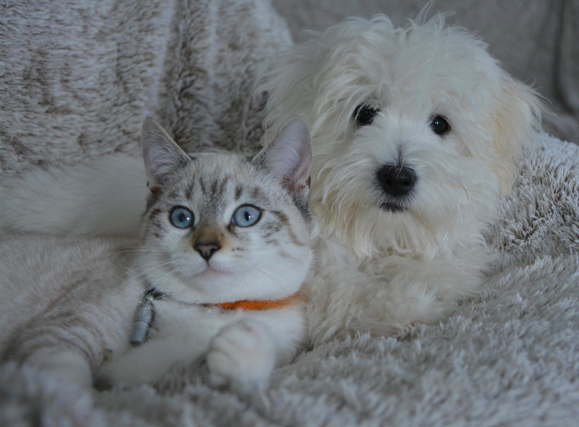 pet friendly detox centers