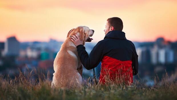 San Jose CA Pet friendly rehabs