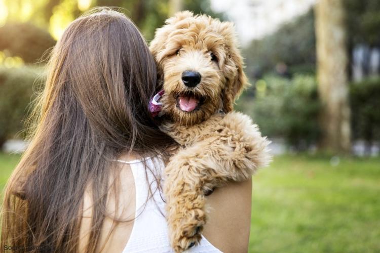 San Diego CA Pet Friendly Drug Rehab