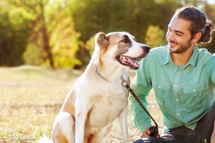 Malibu Ca Pet Friendly Rehabs