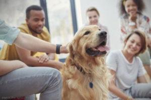 Malibu pet rehab