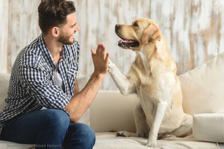 pet friendly rehab Malibu