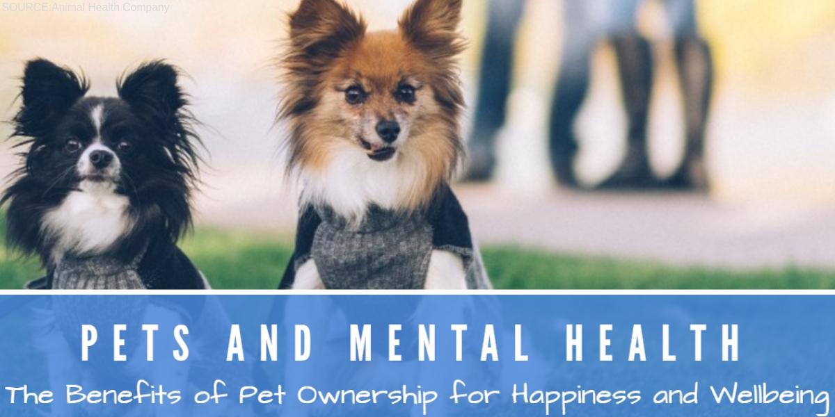 Malibu pet friendly treatment center