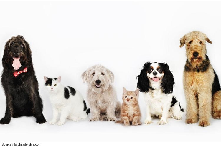 oakland ca pet rehab