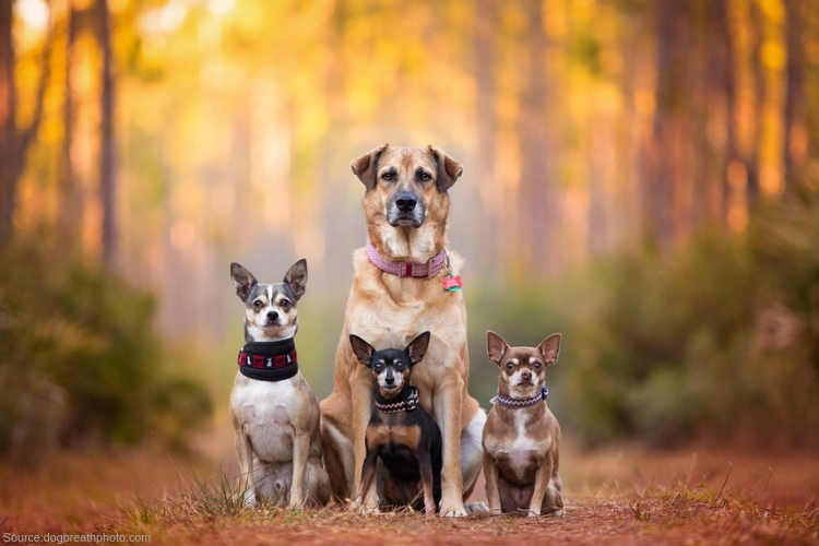 Anaheim ca pet friendly rehabs